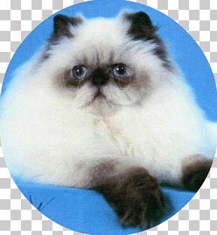 Himalayan Cat Persian Cat Birman Asian Semi-longhair Kitten PNG
