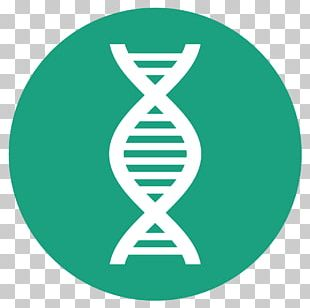 DNA Polymerase Polymerase Chain Reaction DNA Profiling PNG