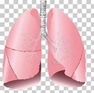 Lung Transplantation Human Body Organ Exhalation PNG