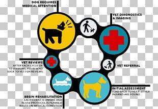 Veterinarian Veterinary Medicine Flowchart Physician PNG