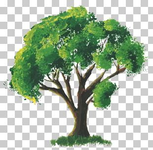 Tree Watercolor Painting Room PNG