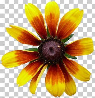 Flower Garden PNG