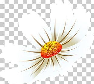 Daisy Family Flower Petal Desktop Common Daisy PNG