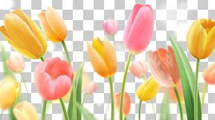 Indira Gandhi Memorial Tulip Garden Paper Flower Painting PNG