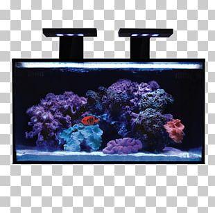 Reef Aquarium Light Nano Aquarium Gallon PNG