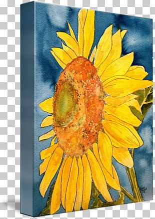 Common Sunflower Watercolor Painting Art Drawing PNG