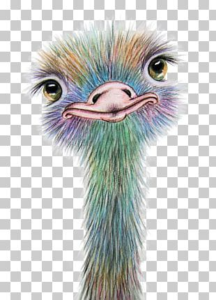 Watercolor Painting Art Drawing Common Ostrich PNG