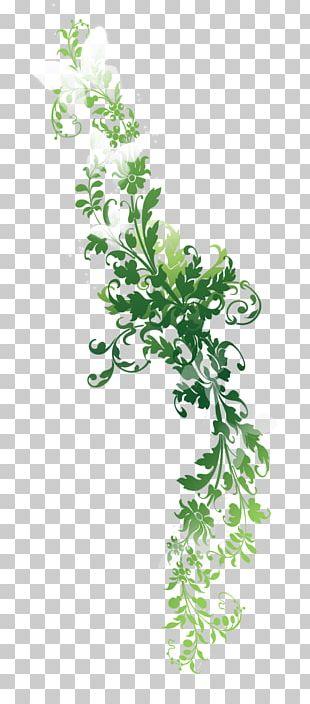 Twig Text Leaf Plant Stem Illustration PNG
