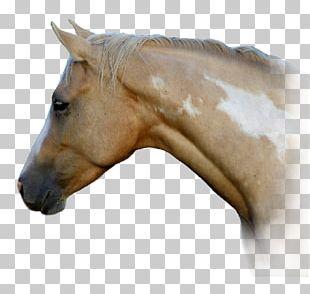 American Paint Horse American Quarter Horse Mane Mustang Halter PNG
