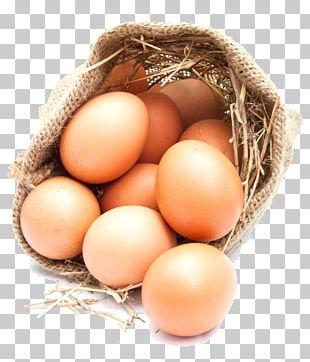 Chicken Egg Euclidean PNG