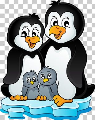 Penguin Can Stock Photo Stock Photography PNG