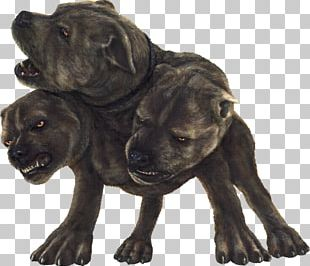 Harry Potter And The Philosopher's Stone Rubeus Hagrid Dog Cerberus PNG