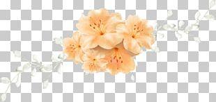 Floral Design Cut Flowers Flower Bouquet Blossom PNG