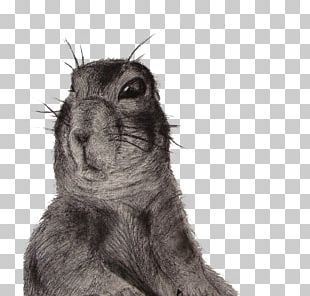 Squirrel Hare Whiskers Fur Snout PNG