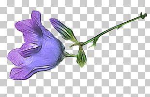 Petal Cut Flowers Plant Stem Leaf Flowering Plant PNG