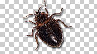 Dark Brown Bed Bug PNG