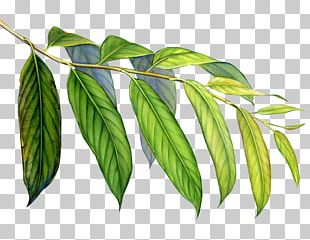 Leaf Art Rainforest Welcome To The Colorful World Of Arp Frique PNG