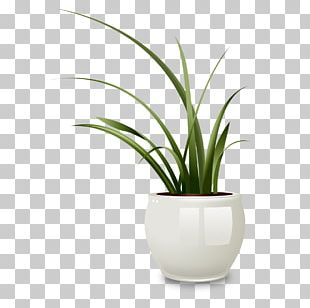 Drawing Flowerpot Vase Photography Illustration PNG