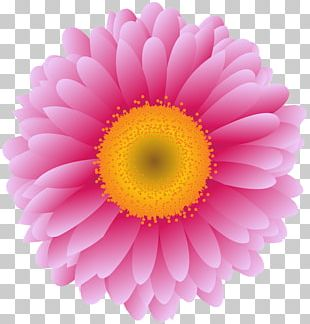 Transvaal Daisy Stock Photography Graphics Flower PNG