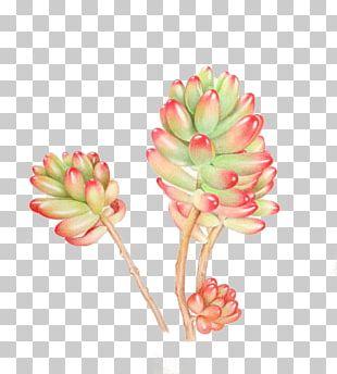 Succulent Plant Watercolor Painting PNG
