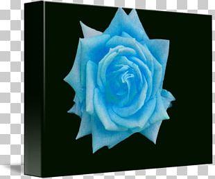 Blue Rose Flower Garden Roses Petal PNG