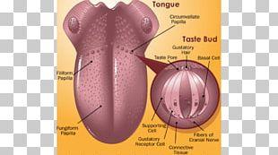 Tongue Periodontal Disease Gums Medicine PNG