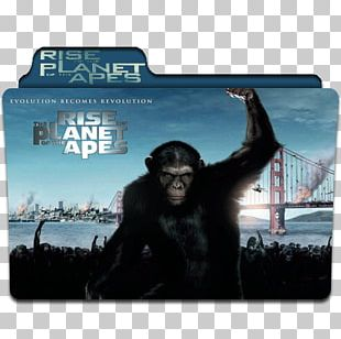 YouTube Rise Of The Planet Of The Apes Film Dawn Of The Planet Of The Apes PNG