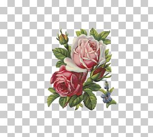 Rose Flower Apron PNG