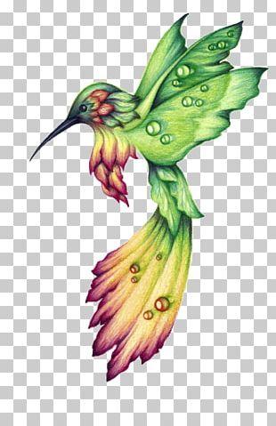 Hummingbird Drawing Birds Watercolor Painting PNG