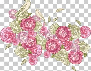 Rose Color Photography Illustration PNG