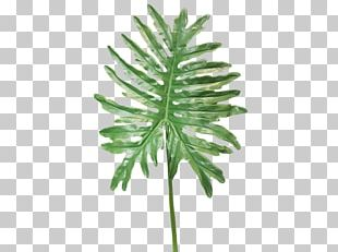 Fern Plant Stem Artificial Flower Leaf PNG