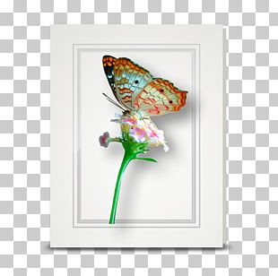 Butterfly Insect Pollinator Morpho Moth PNG