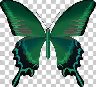 Butterfly Insect Wing Antenna PNG