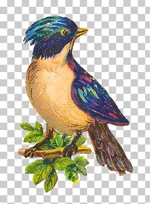 Bird Beak Feather PNG