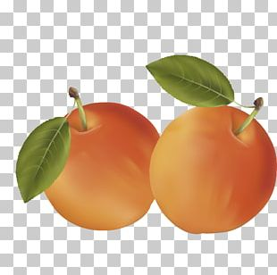 Clementine Mandarin Orange Auglis Fruit PNG