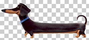 Dachshund Bichon Frise Dog Breed Cat Pet PNG