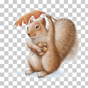 Squirrel Chipmunk Art Watercolor Painting Drawing PNG