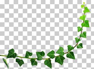Semicircle Leaf PNG
