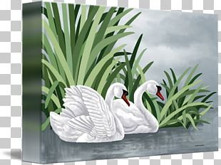 Duck Goose Mute Swan Painting Gallery Wrap PNG