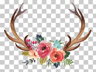 Deer Antler Moose Flower PNG