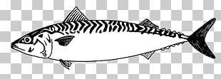 Mackerel Line Art Fish Drawing PNG