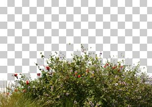 Flower Garden Lawn Tree PNG