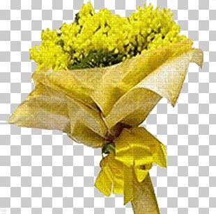 International Women's Day Woman Flower Acacia Dealbata Mimosa PNG