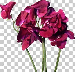 Cut Flowers Purple Pink Rosaceae PNG