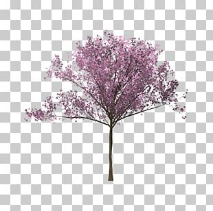 Tree Cherry Blossom Twig Branch PNG