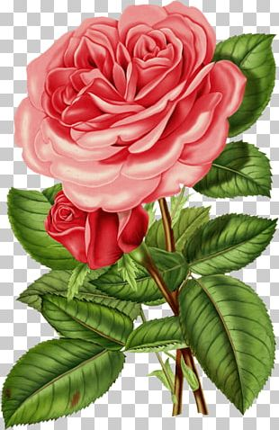 Rose Flower Vintage Clothing PNG