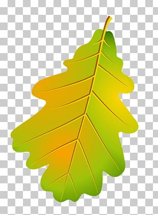 Autumn Leaves Maple Leaf Plant PNG