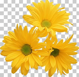 Chrysanthemum Yellow Flower Stock Photography Color PNG