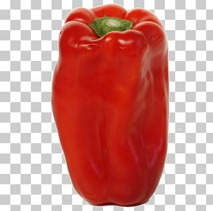 Chili Pepper Red Bell Pepper Vegetable Peperoncino PNG