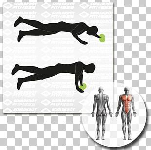 Physical Fitness Abdominal Exercise Fitness Centre Balance Board General Fitness Training PNG